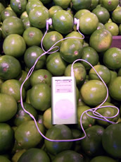 a lime wearing a green ipod